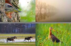 2nd International Meeting of Nature Photographers 2016