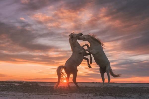 Angels Of Camargue Daniel Korjonov